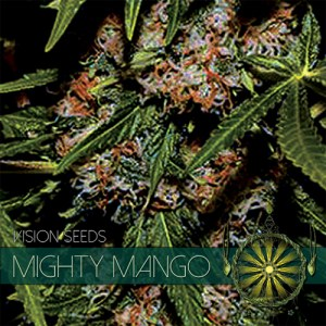Mighty Mango Bud Fem Vision Seeds