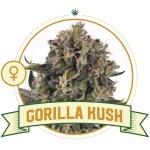 Gorilla Kush Fem City Seeds Bank
