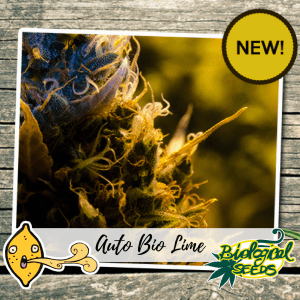 AUTO BIO LIME Biological Seeds
