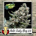 AUTO LADY BUG 2.0 BIOLOGICAL SEEDS