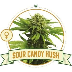 Sour Candy Fem City Seeds Bank