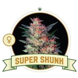 Super Skunk Fem City Seeds Bank