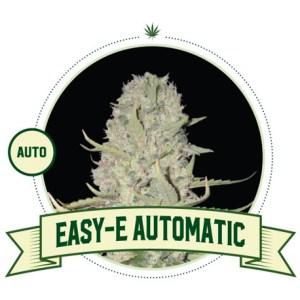 Easy E Auto City Seeds Bank