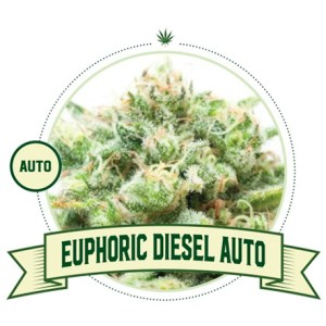 Euphoric Diesel Auto City Seeds Bank