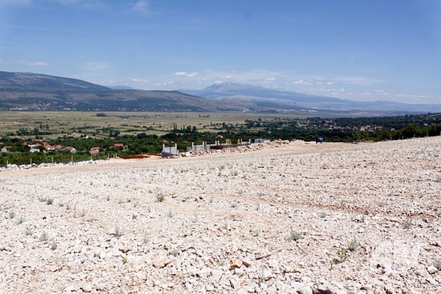 plantaze-smilja-0623115