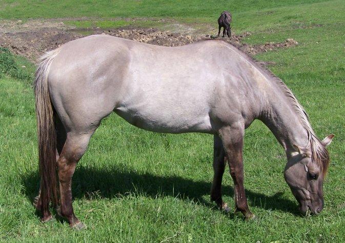 Leo Foundation Stallion