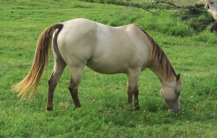 Image result for champagne horse