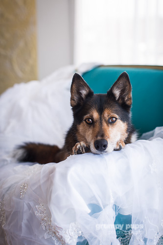 dog laying on a wedding dress, grumpy pups pet photography