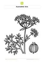 Ausmalbilder Blumen  Kostenlose Ausmalbilder