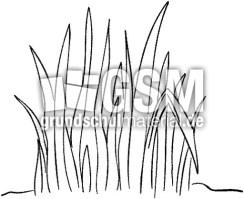 Gras   Bilder Pflanzen und Früchte   Bilder   HuS Klasse 1 ...