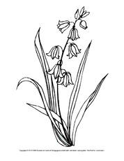 Frühblüher in der Grundschule - Ausmalbilder Blumen