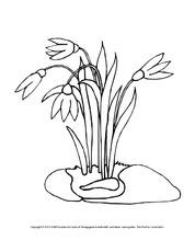 Ausmalbilder Blumen - Frühling - Jahreszeiten - HuS Klasse