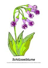 Frühlingsblüher - Tafelkarten - Frühling - Jahreszeiten