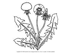 Ausmalbild - Frühlingsblüher in der Grundschule