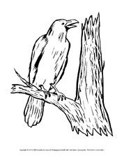 Ausmalbilder-Vögel - Vögel - Tiere - Sachthemen - HuS