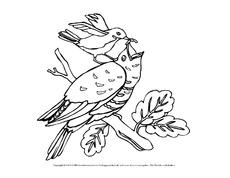 Ausmalbilder - Vögel - Tiere - Sachthemen - HuS Klasse 3