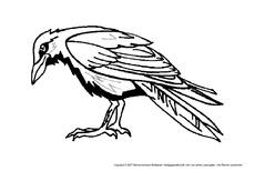 Vogel in der Grundschule - Tiere zum Ausmalen