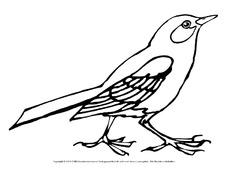 Vögel Bilder Zum Ausmalen - Ausmalbilder