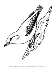 Arbeitsblatt in der Grundschule - Vögel - Tiere zum