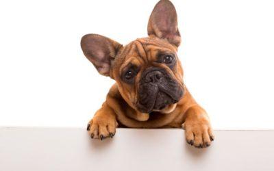 Familienrecht- Hunde… keine Prüfung Tierwohl bei Trennung- nur Eigentümereigenschaft zählt