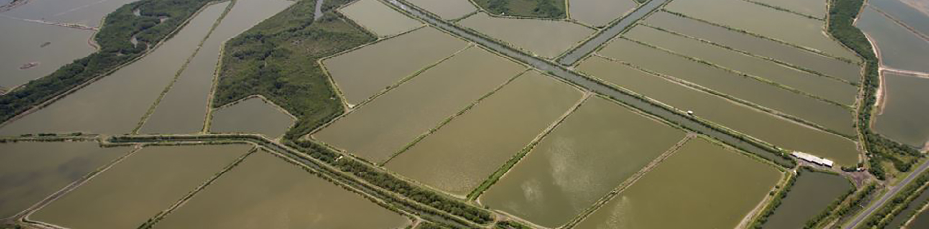 Vista aérea de la Finca La Apintal