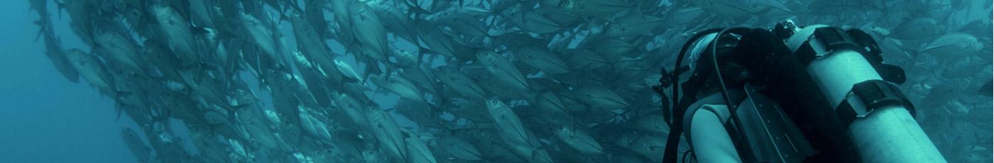 Banco de peces y buzo