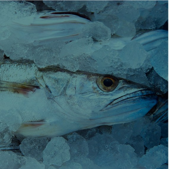 Spain is the top fish consumer country within the EU