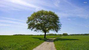 El Camino | Principios de Vida que dan Rumbo