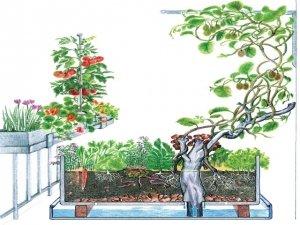 Permaculturacome progettare un orto