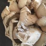 Risotto ai funghi orecchietta