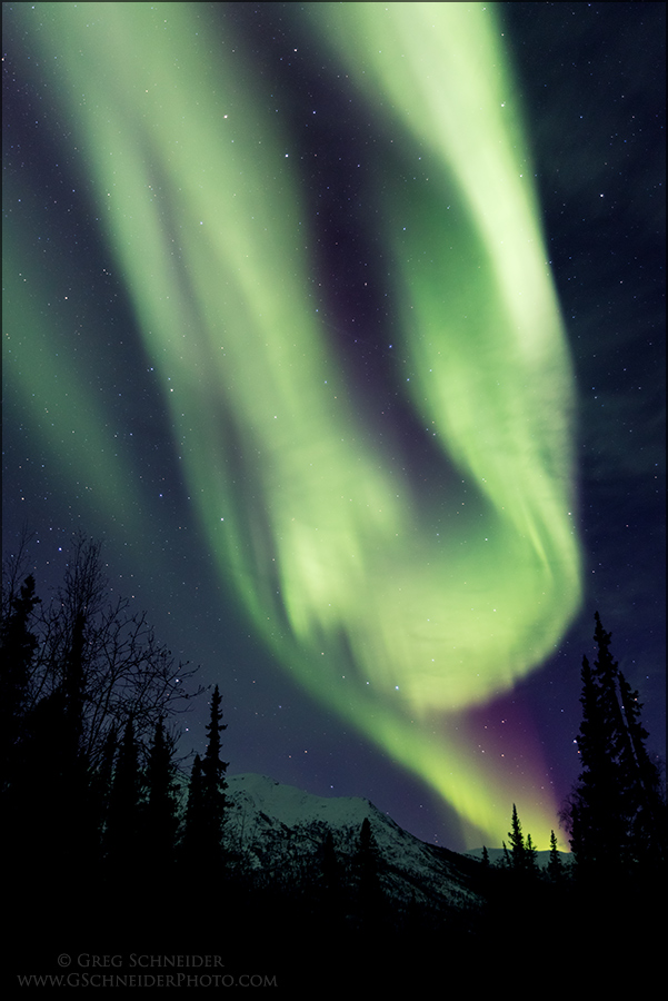 Aurora Borealis above spruce and mountain vertical