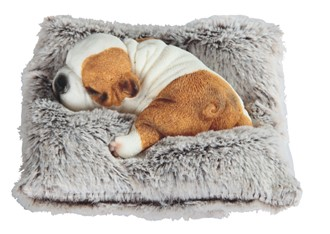 6 dog on pillow gsc imports
