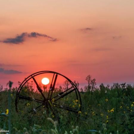 Rusted wheel in field at sunset