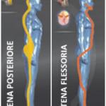 catena flessoria posteriore