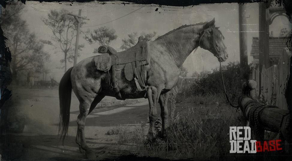 Animal House Wallpaper Missouri Fox Trotter Red Dead Redemption 2 Horse Breeds