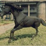 Black Arabian Horse Rdr2 Red Dead Online Horses Database Statistics Red Dead Redemption 2