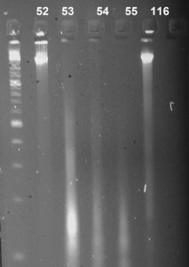 DNA quality