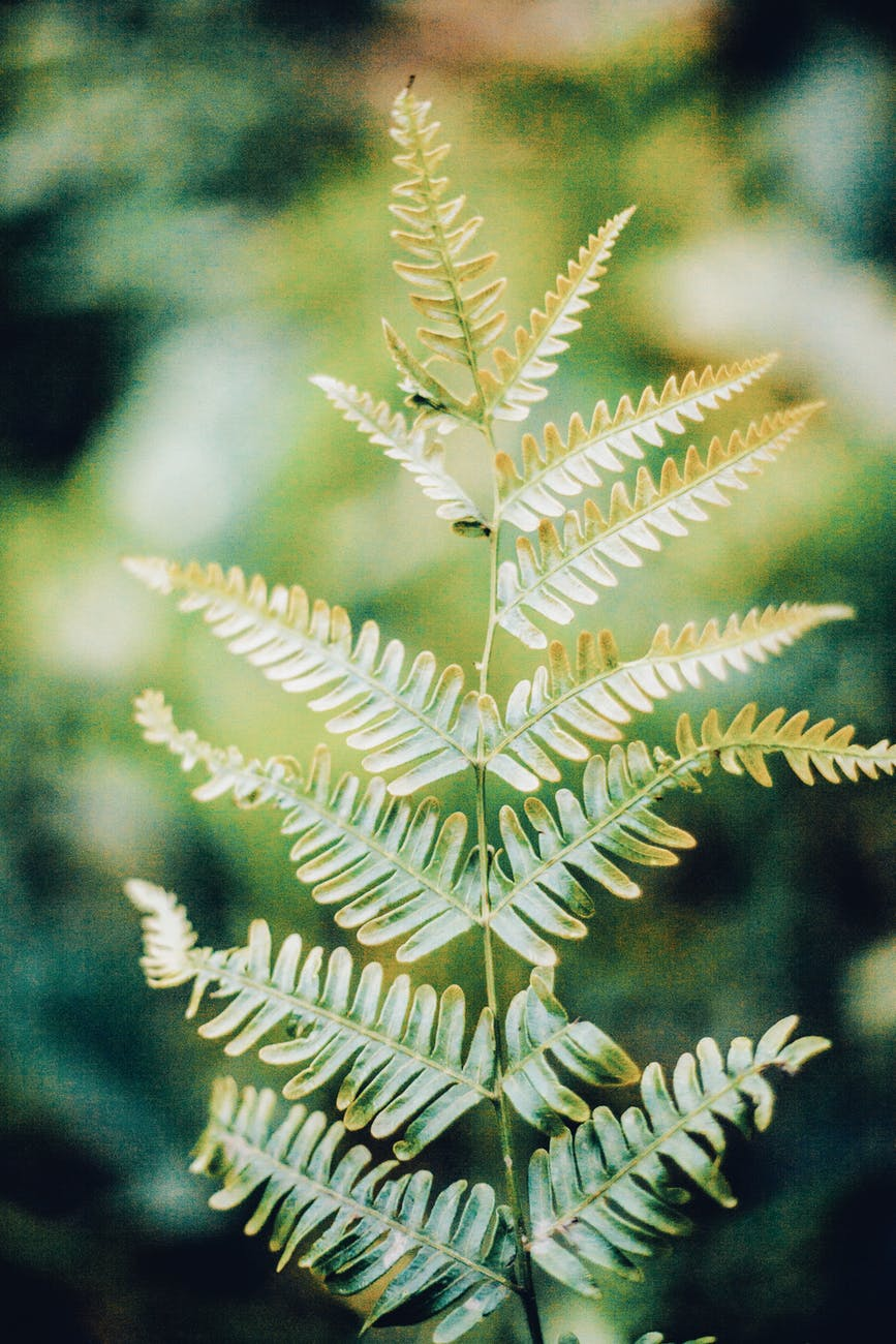vibrant fern growing in rainforest