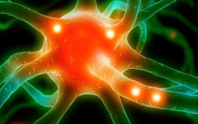 Ciclo di seminari sul Neuromarketing