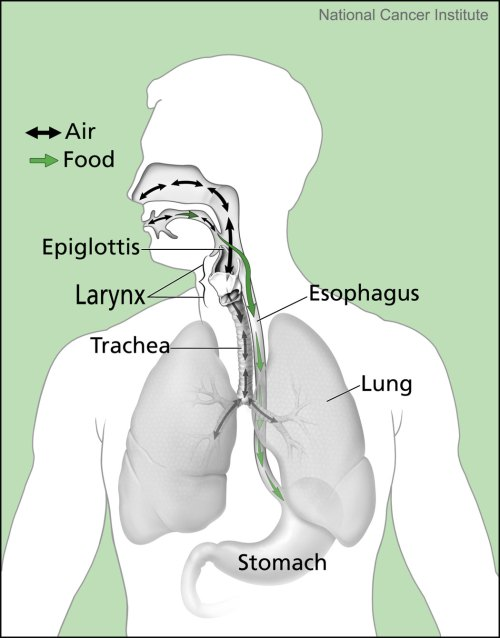 small resolution of 20190329 nci esophagus diagram