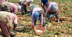 odemiste-patates-ureticilerine-sertifikali-tohum-uyarisi