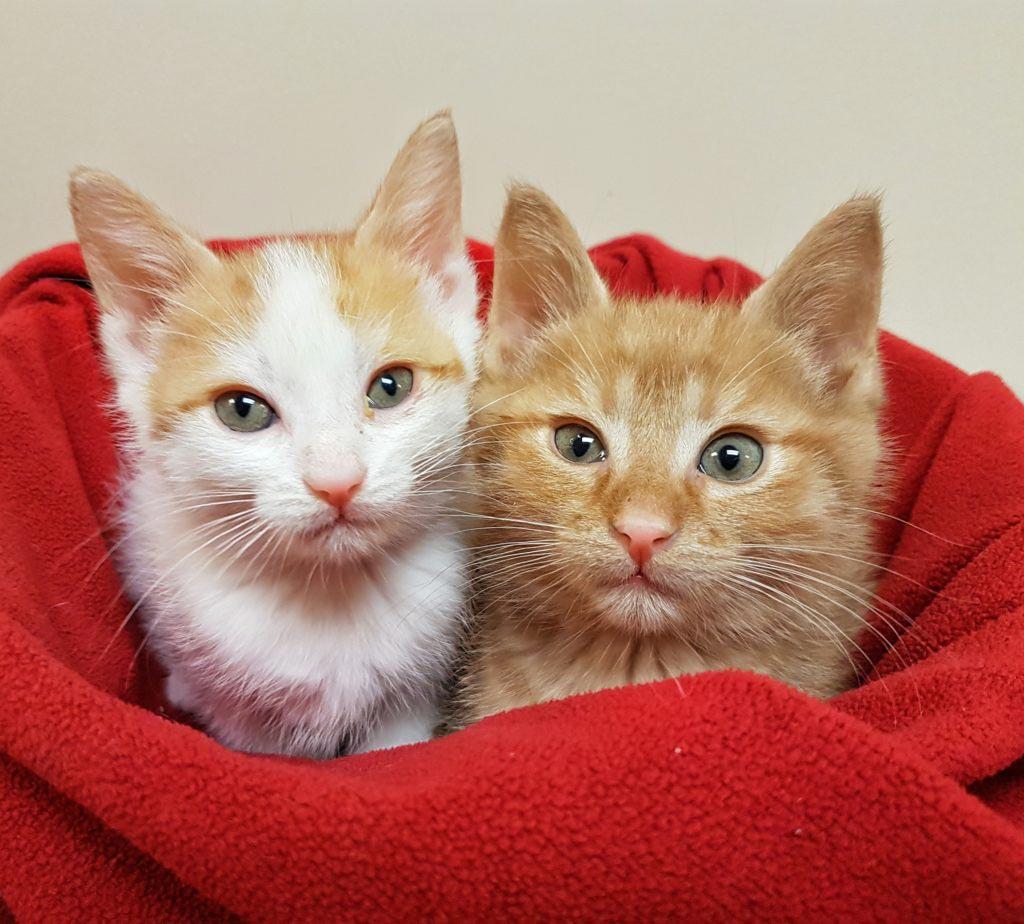 Kitten season has arrived We need your help  Georgian