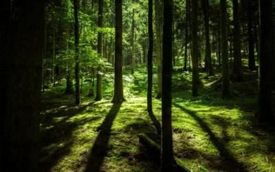 GTOP Trading: our story! Ecologische en duurzame tuin- en bouwmaterialen voor de toekomst!