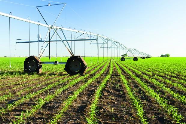 Resultado de imagen de agriculture in senegal