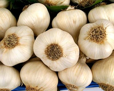 https://i0.wp.com/www.guadagnorisparmiando.com/wp-content/uploads/2008/09/coltivare-laglio-in-balcone.jpg