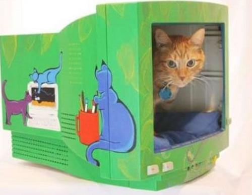Costruire Una Cuccia Per Gatto Col Fai Da Te Guadagno