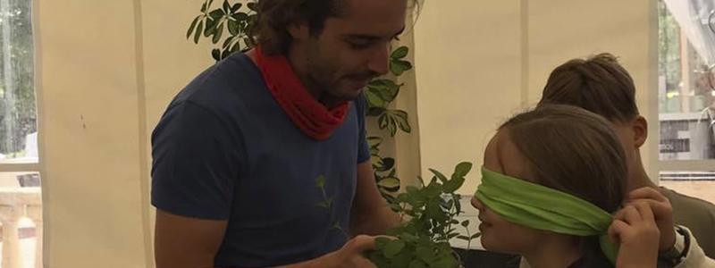 usos de las plantas aromáticas