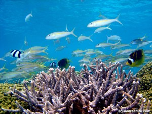 Fish swimming above coral
