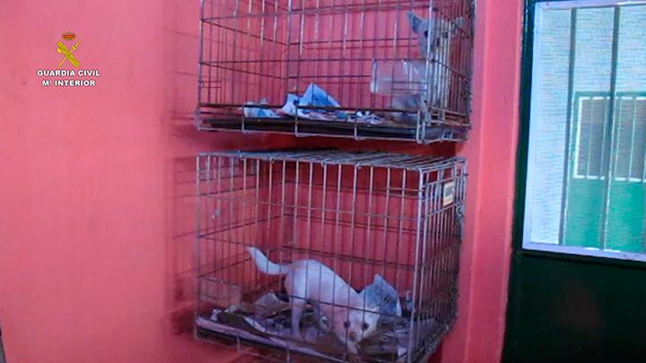La Guardia Civil interviene  400 cachorros de perro en el mes de diciembre
