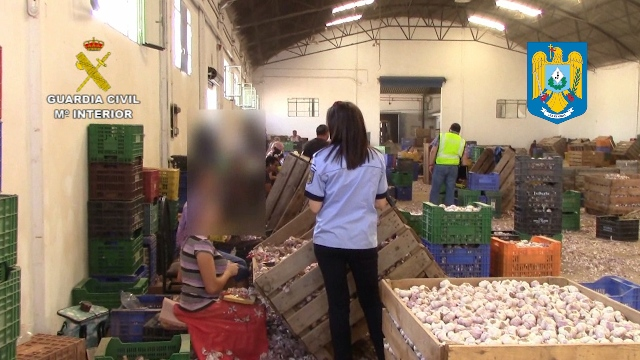 La Guardia Civil y la Policía de Rumania auxilian a 59 trabajadores en condiciones laborales precarias durante la campaña de recolección del ajo